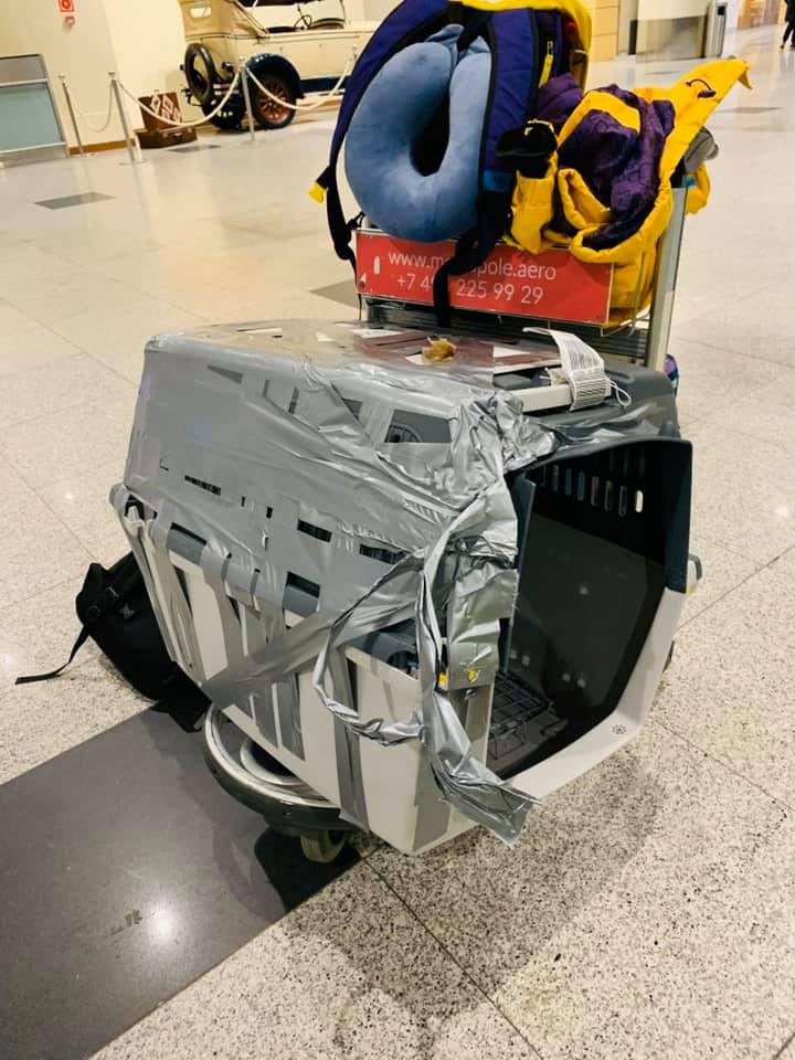 Фото Финик – не багаж: собака чудом пережила погрузку в самолёт S7 2