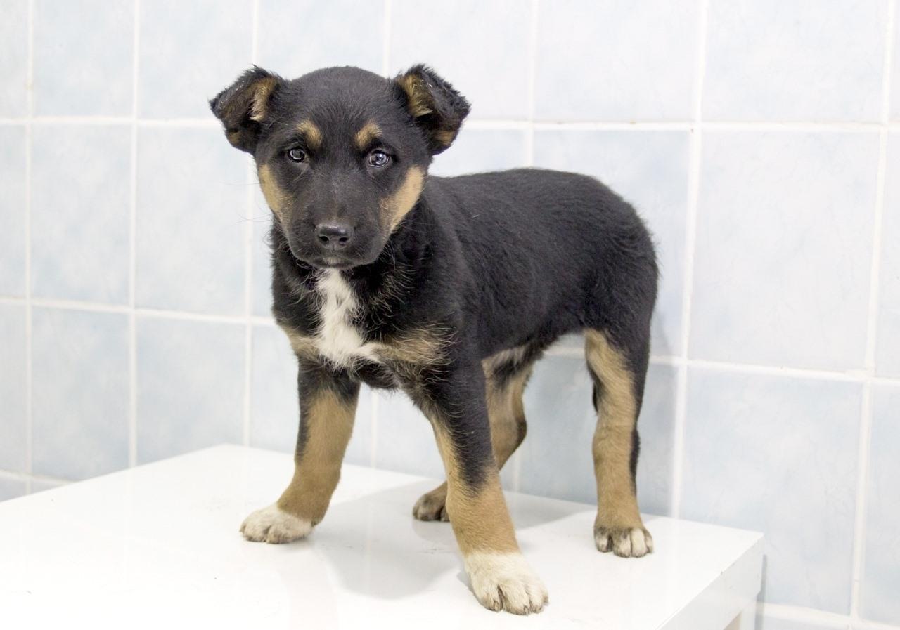 Фото «Стильная и изящная Йамка ищет хозяина»: 7 умильных фото повзрослевшего щенка, спасённого из ямы в Новосибирске 2