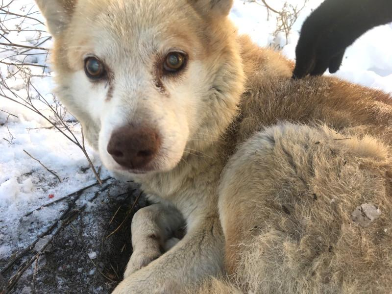 фото «Дожить последние дни в тепле»: в Искитиме старому слепому псу ищут дом 2