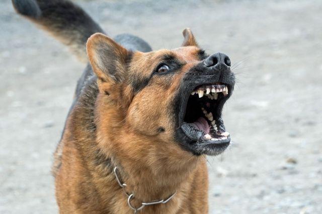 фото «Взяли в круг и начали кидаться»: жительница Кузбасса пожаловалось Цивилёву на нападение стаи собак 3