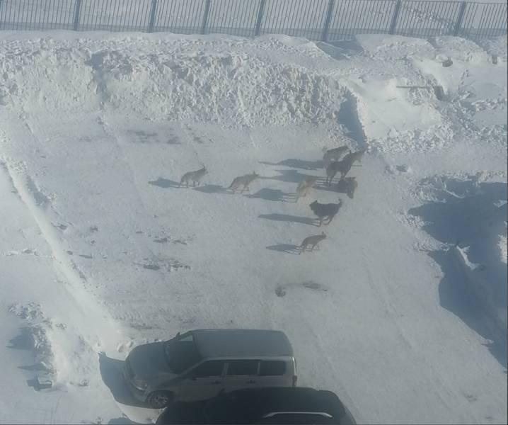 фото «Не смотреть в глаза и не хвататься за палку»: кинолог из Новосибирска рассказала, как вести себя с агрессивными собаками 2
