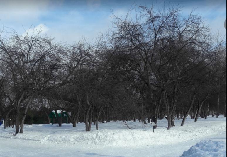 фото «Взяли в круг и начали кидаться»: жительница Кузбасса пожаловалось Цивилёву на нападение стаи собак 2