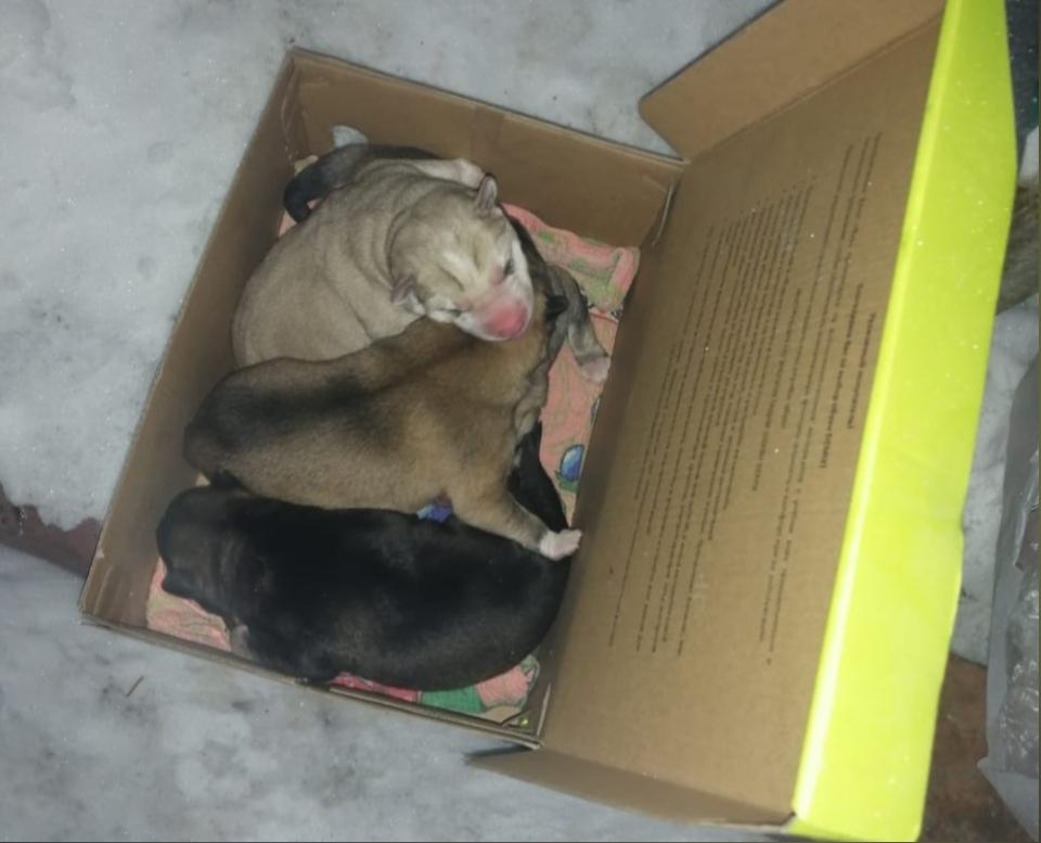 «Лежали в коробке из-под обуви»: новорождённых щенков выбросили на помойку в Первомайском районе
