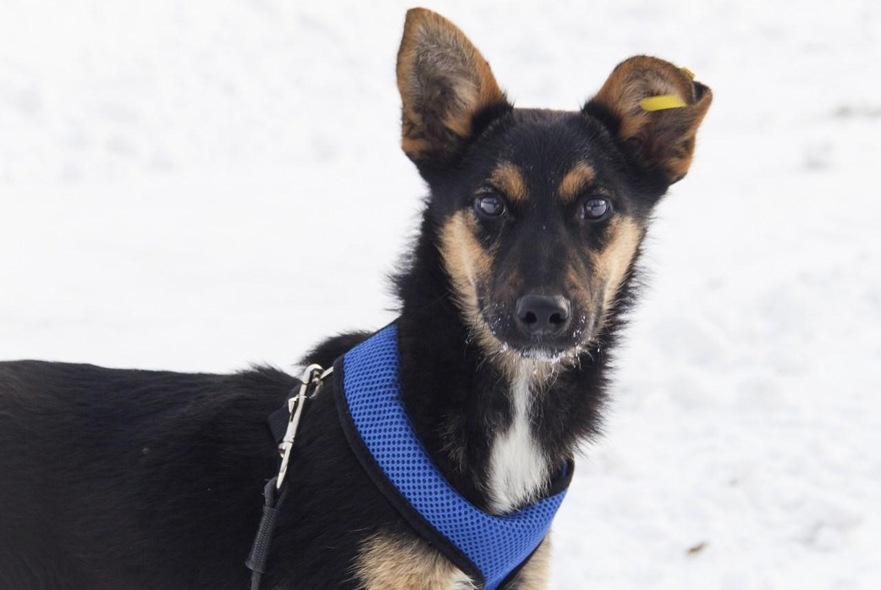 Фото «Стильная и изящная Йамка ищет хозяина»: 7 умильных фото повзрослевшего щенка, спасённого из ямы в Новосибирске 6