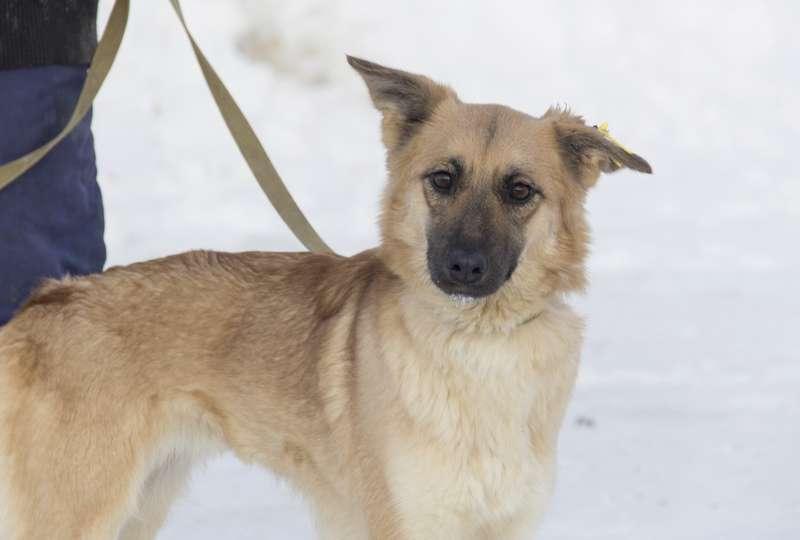 фото Мудрый Лаврик, боец Астра и скромница Лиса: собаки новосибирского приюта, которые уже сегодня могут осчастливить вас 7