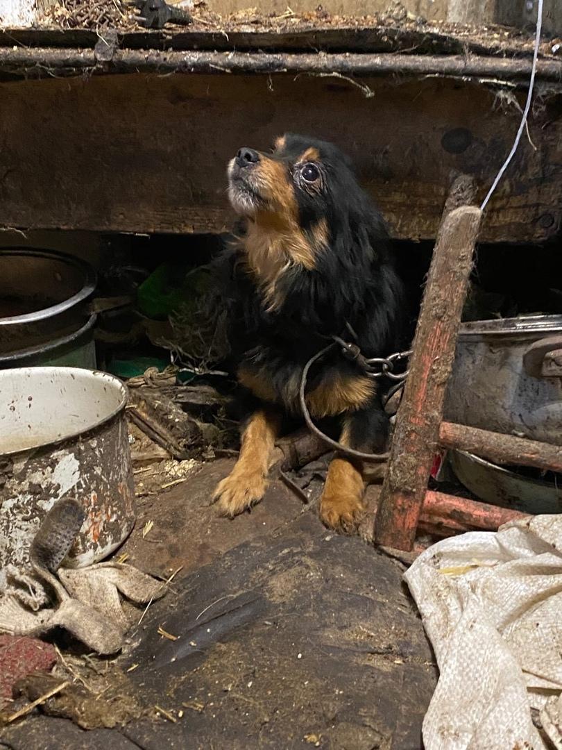 Фото «Братская могила» вместо дома: зооактивисты показали приют-«концлагерь» для животных в Евсино 3