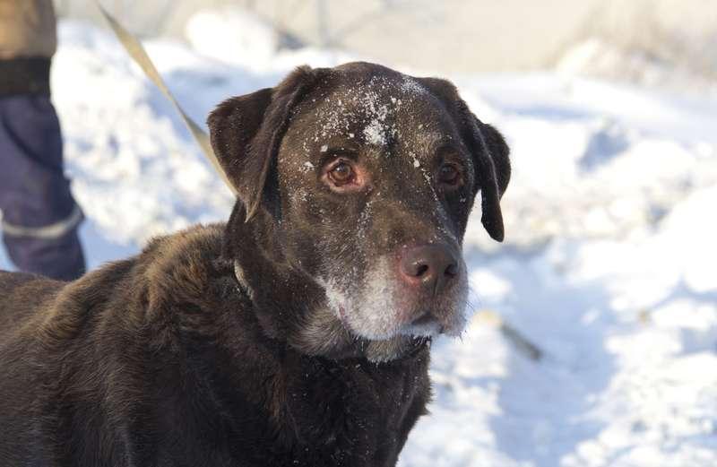 фото Мудрый Лаврик, боец Астра и скромница Лиса: собаки новосибирского приюта, которые уже сегодня могут осчастливить вас 4
