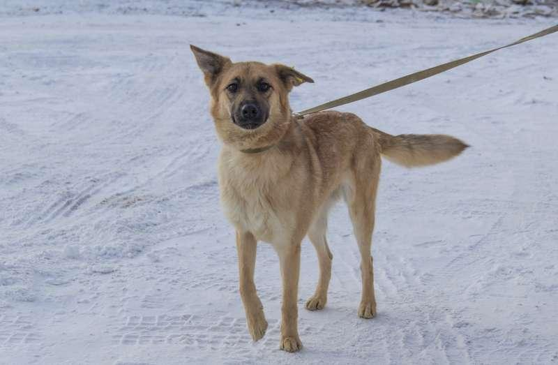фото Мудрый Лаврик, боец Астра и скромница Лиса: собаки новосибирского приюта, которые уже сегодня могут осчастливить вас 8