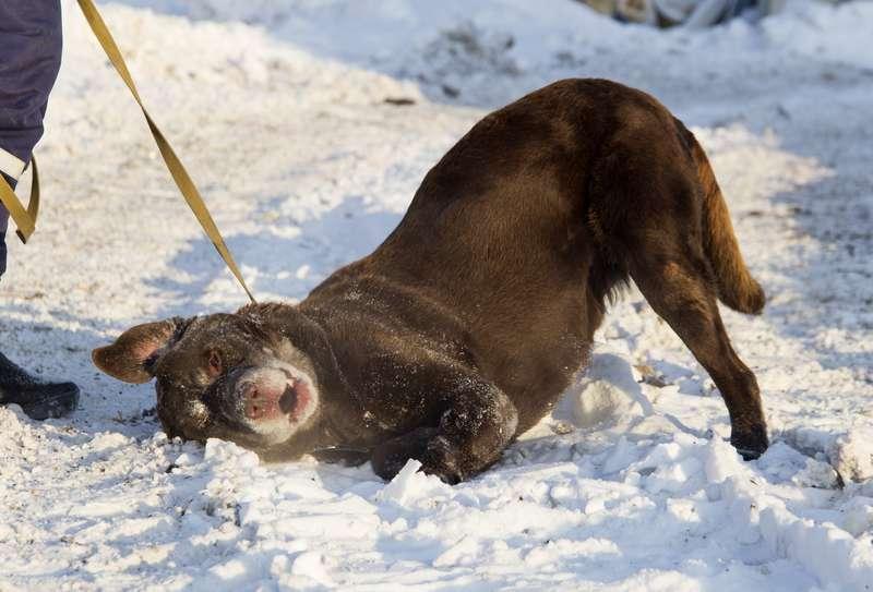 фото Мудрый Лаврик, боец Астра и скромница Лиса: собаки новосибирского приюта, которые уже сегодня могут осчастливить вас 3
