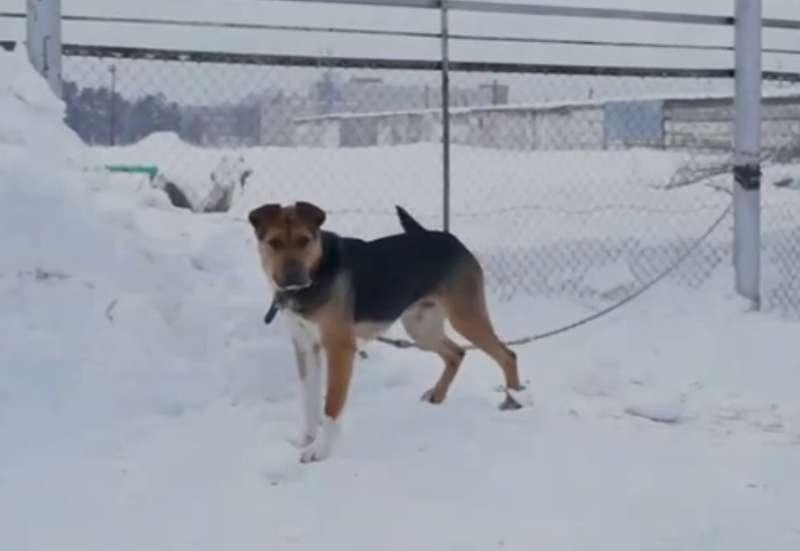 фото Мудрый Лаврик, боец Астра и скромница Лиса: собаки новосибирского приюта, которые уже сегодня могут осчастливить вас 11