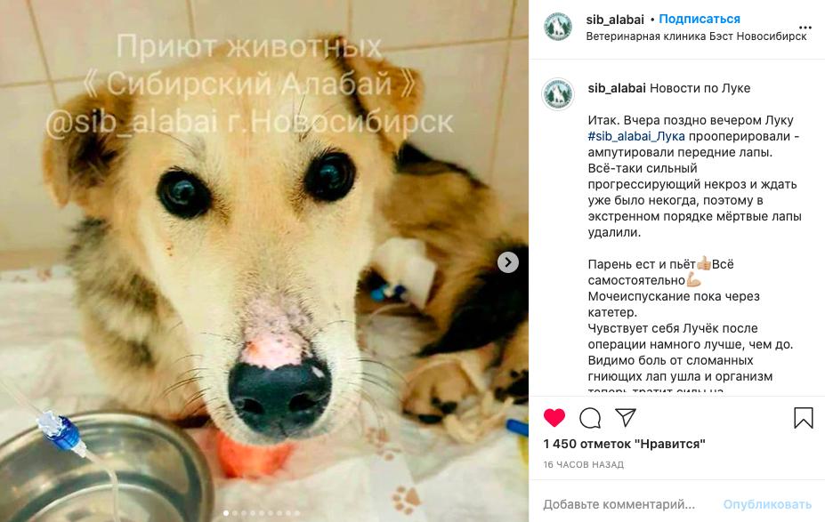 фото Живодеры, которых не судят: отрубленные лапы и вспоротые животы – истории о жестокости новосибирцев к животным 7