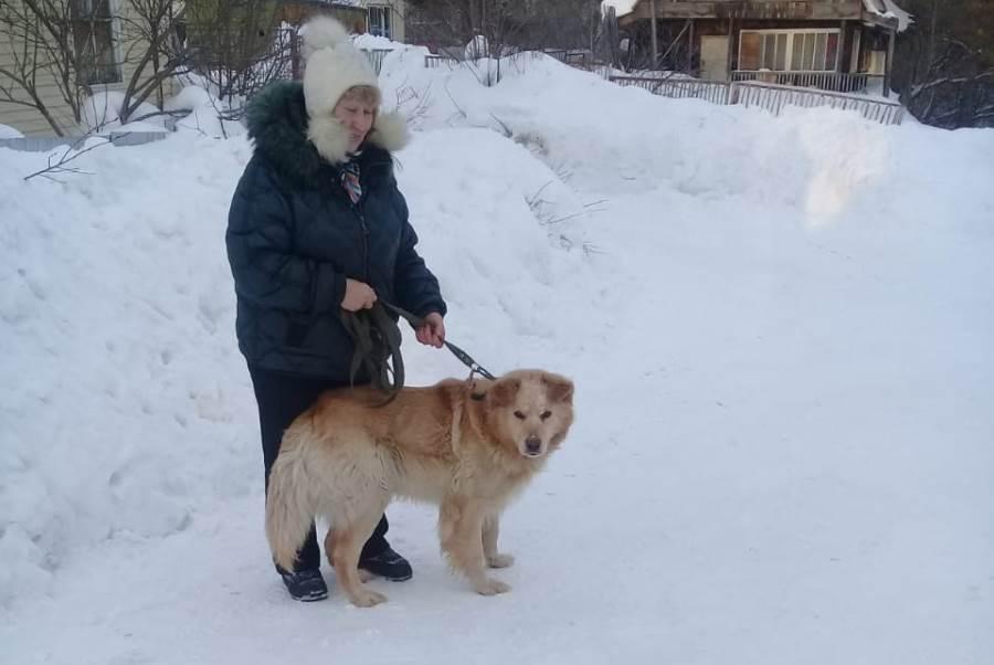 фото Вы будете плакать: истории счастливых собак, которым не дали умереть на улице 3
