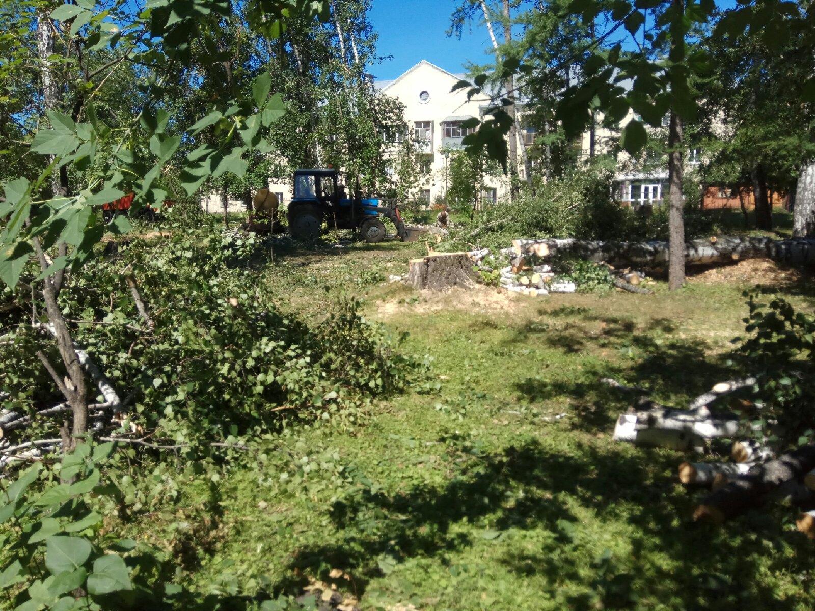Фото «Здесь киосков не будет»: власти Новосибирска объяснили вырубки в Берёзовой роще 3