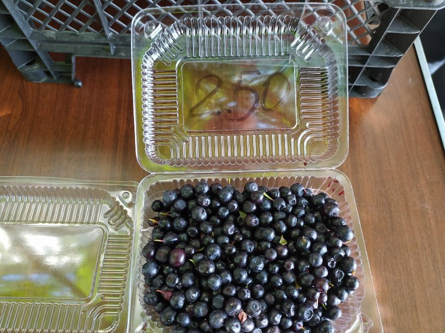 фото Не стесняйтесь торговаться: где и за сколько купить ягоды в Новосибирске - обзор цен 21