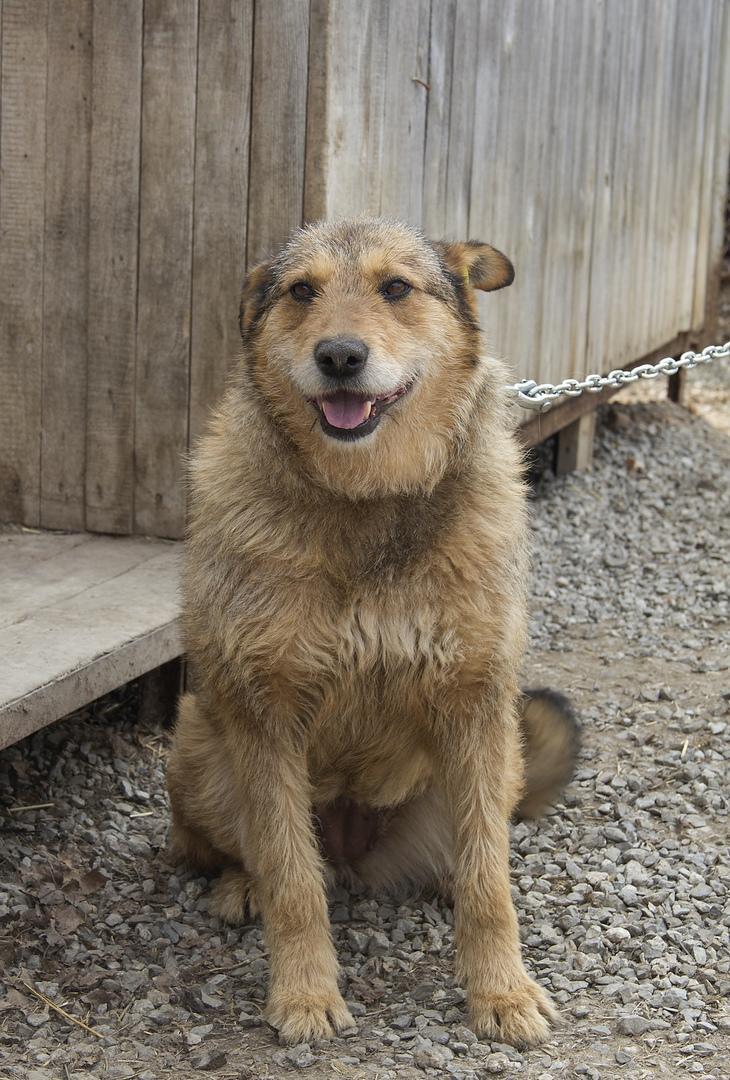 фото Вы будете плакать: истории счастливых собак, которым не дали умереть на улице 6