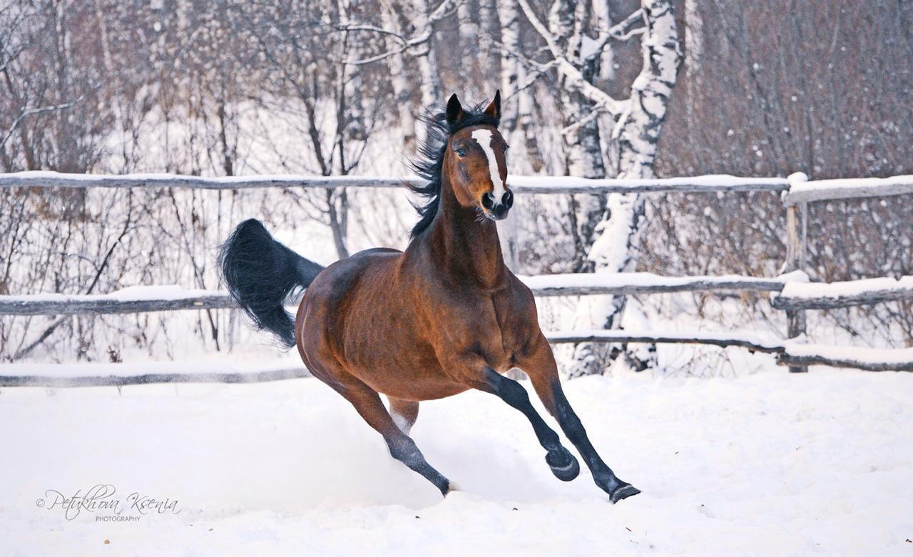Фото Обгоревшую на пожаре лошадь Люсю спасают в Томске 3