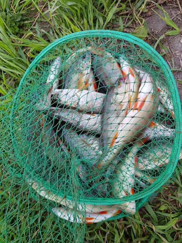 фото Ни хвоста, ни чешуи: где отдохнуть и порыбачить вблизи Новосибирска 5