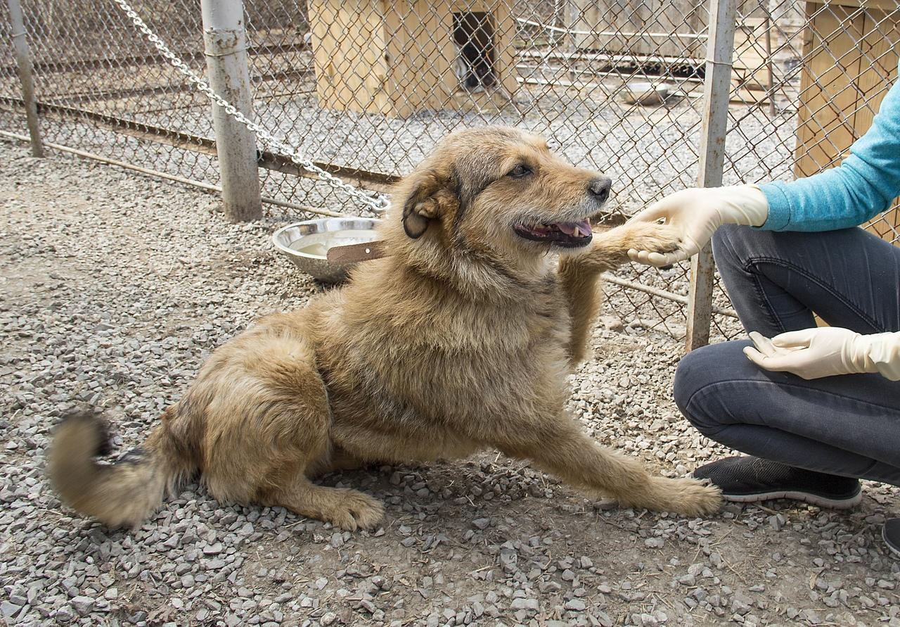 фото Вы будете плакать: истории счастливых собак, которым не дали умереть на улице 5