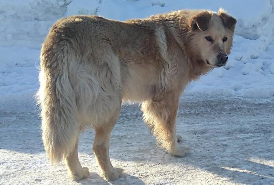 фото Вы будете плакать: истории счастливых собак, которым не дали умереть на улице 2