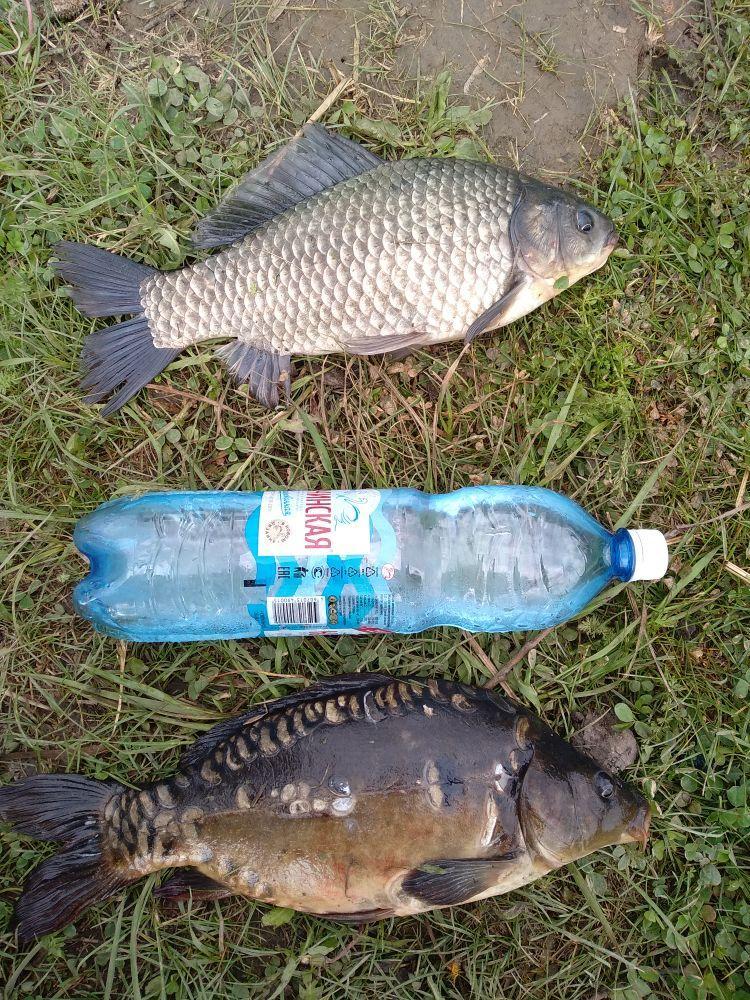 фото Ни хвоста, ни чешуи: где отдохнуть и порыбачить вблизи Новосибирска 9