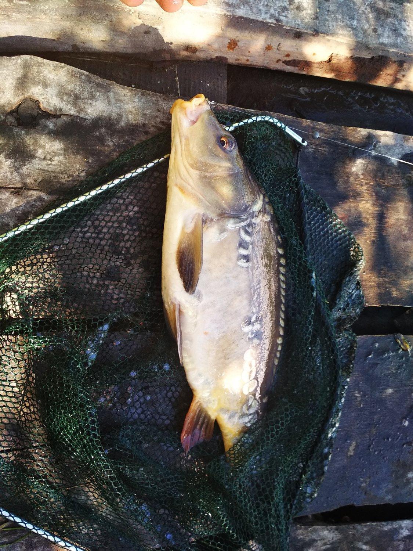 фото Ни хвоста, ни чешуи: где отдохнуть и порыбачить вблизи Новосибирска 8