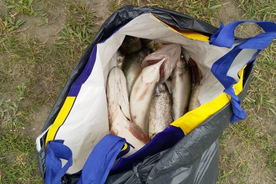 фото Ни хвоста, ни чешуи: где отдохнуть и порыбачить вблизи Новосибирска 14