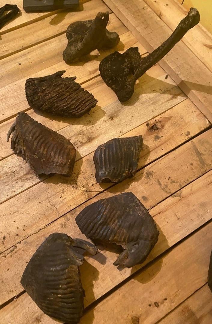Фото В тюменской реке нашли останки редкого животного эпохи мамонтов 2