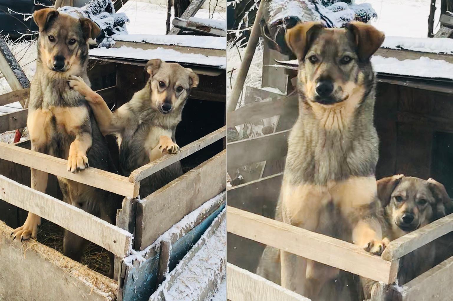 Фото Харизматичный Пирс выжил после выстрела и борется за звание «Главного пёсика Новосибирска» – трогательная история третьего финалиста 2