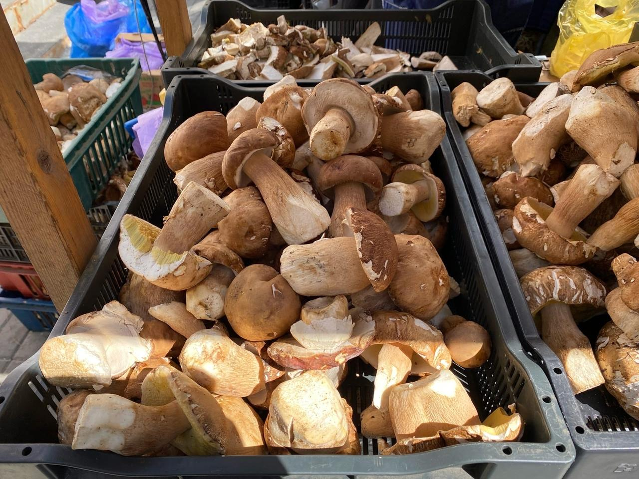 фото В Новосибирске грибники пожаловались на плохой урожай дикоросов летом 2021 года 2