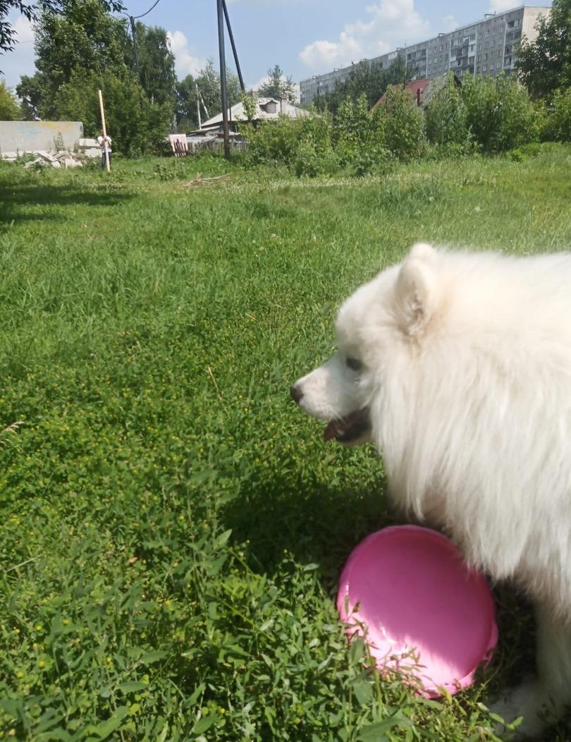 фото Довольный Вегас забрал свой приз в конкурсе «Главный пёсик Новосибирска» и отправился с ним на прогулку 3