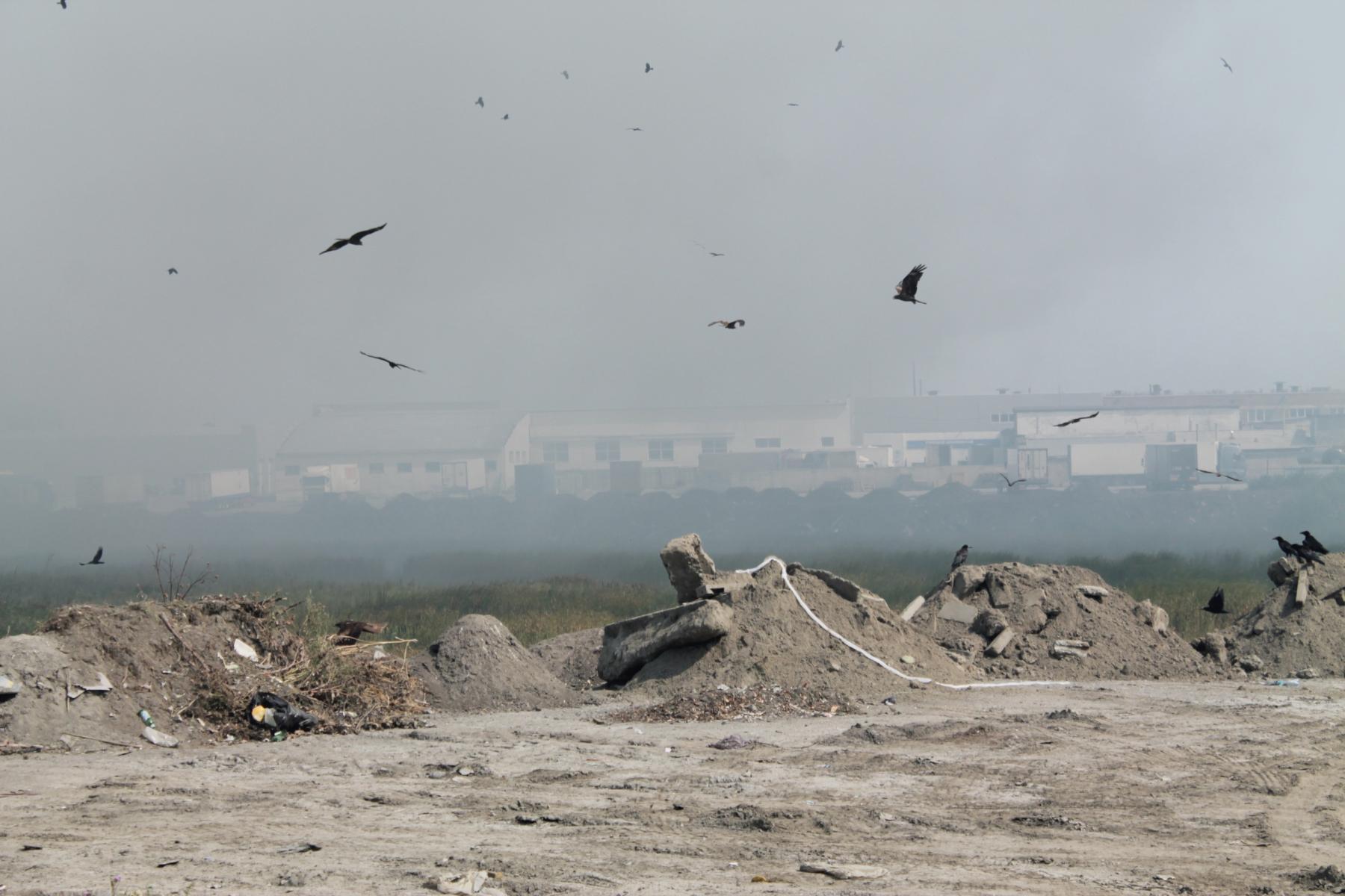фото Мэр Новосибирска Локоть допустил консервацию мусорного полигона «Левобережный» 2