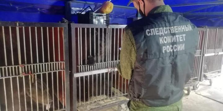 фото Следователи проверят нападение циркового медведя на дрессировщицу в Кузбассе 2