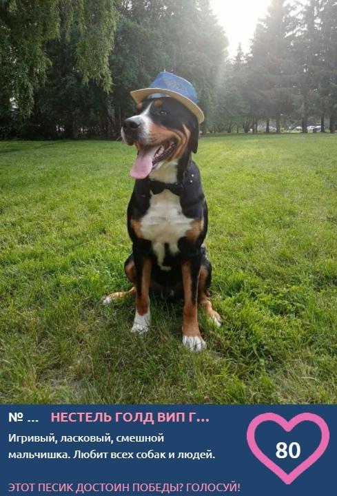 фото Самый модный пёс на площадке: тренды лета-2021 от участников конкурса «Главный пёсик Новосибирска» 3