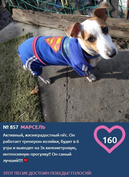 фото Самый модный пёс на площадке: тренды лета-2021 от участников конкурса «Главный пёсик Новосибирска» 5