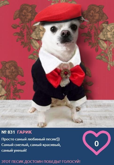 фото Самый модный пёс на площадке: тренды лета-2021 от участников конкурса «Главный пёсик Новосибирска» 4