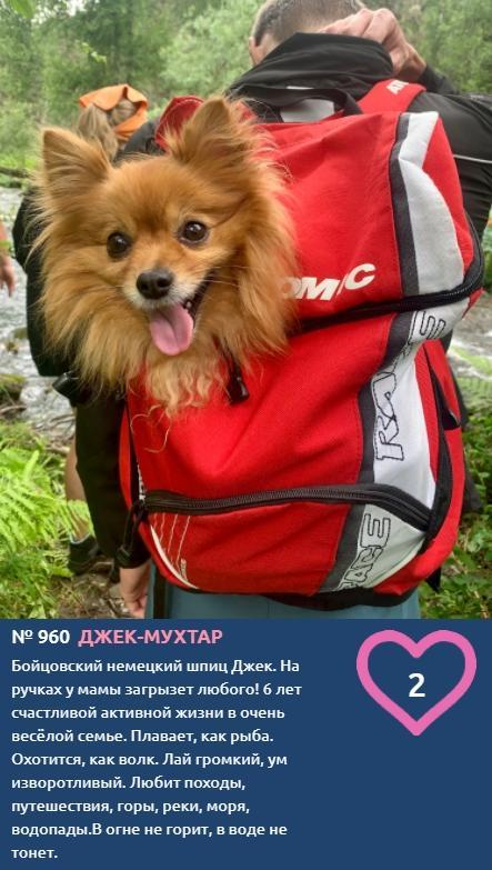 фото Путешественник Джек покорил моря, водопады и горы, а теперь хочет победить в конкурсе «Главный пёсик Новосибирска» 2