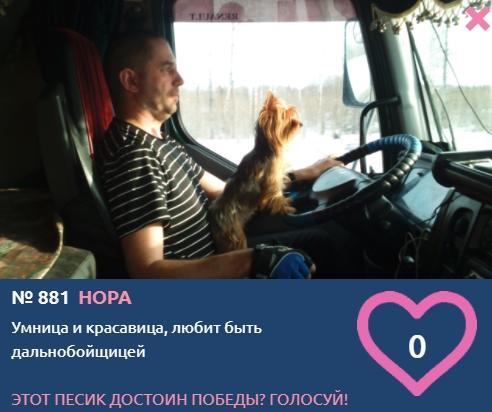 Фото «Я и мой хозяин»: умилительные фото участников конкурса «Главный пёсик Новосибирска» 11