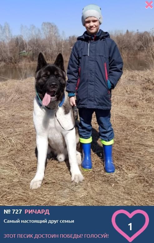 Фото «Я и мой хозяин»: умилительные фото участников конкурса «Главный пёсик Новосибирска» 13