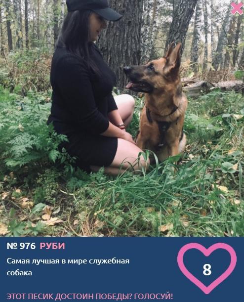 Фото Служебная собака, принцесса и философ – новые участники конкурса «Главный пёсик Новосибирска» 2