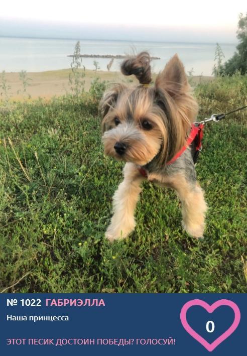 Фото Служебная собака, принцесса и философ – новые участники конкурса «Главный пёсик Новосибирска» 3