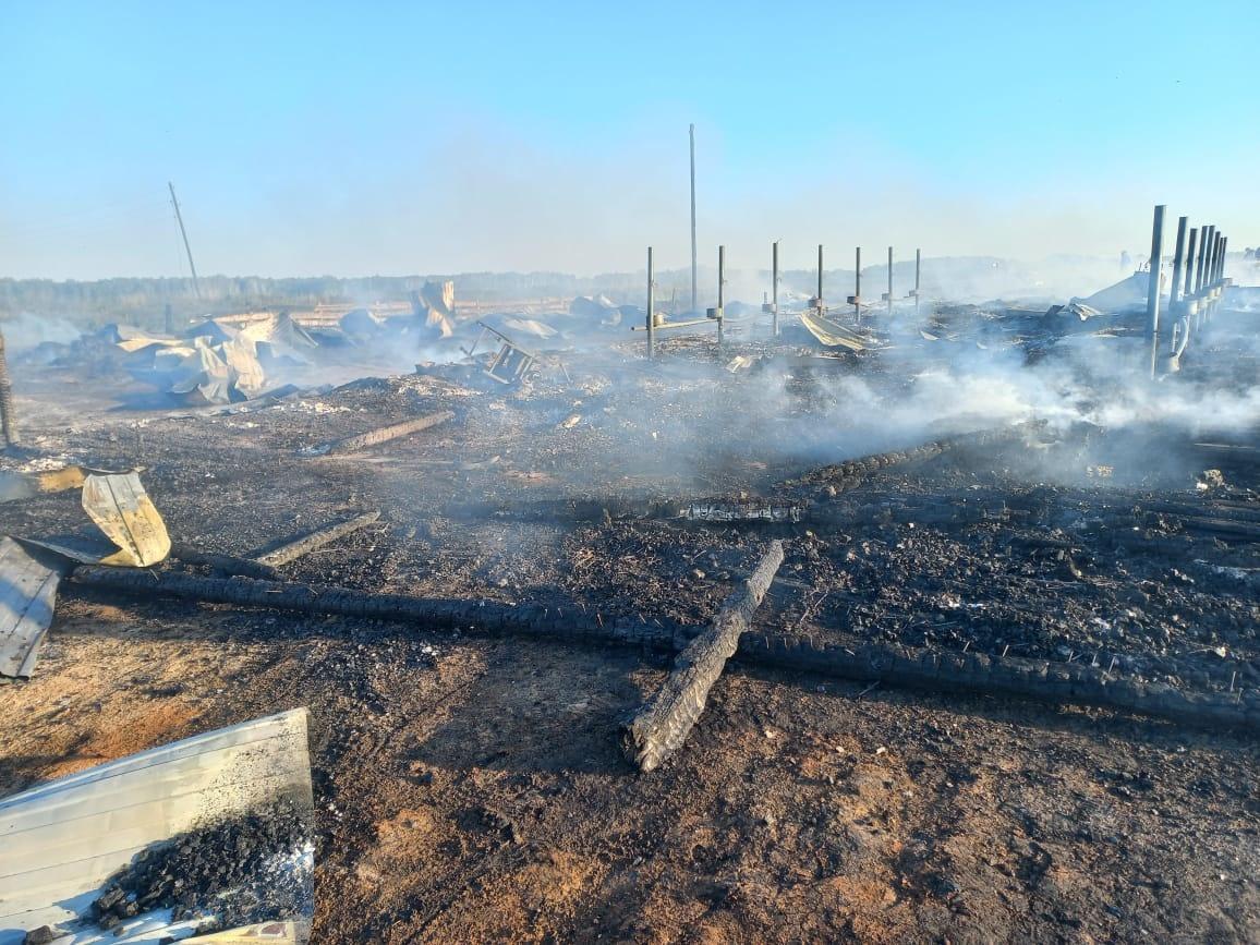 фото Стадо телят погибло в пожаре в селе под Новосибирском 2