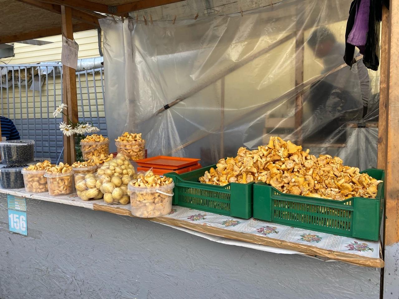 фото В Новосибирске грибники пожаловались на плохой урожай дикоросов летом 2021 года 4