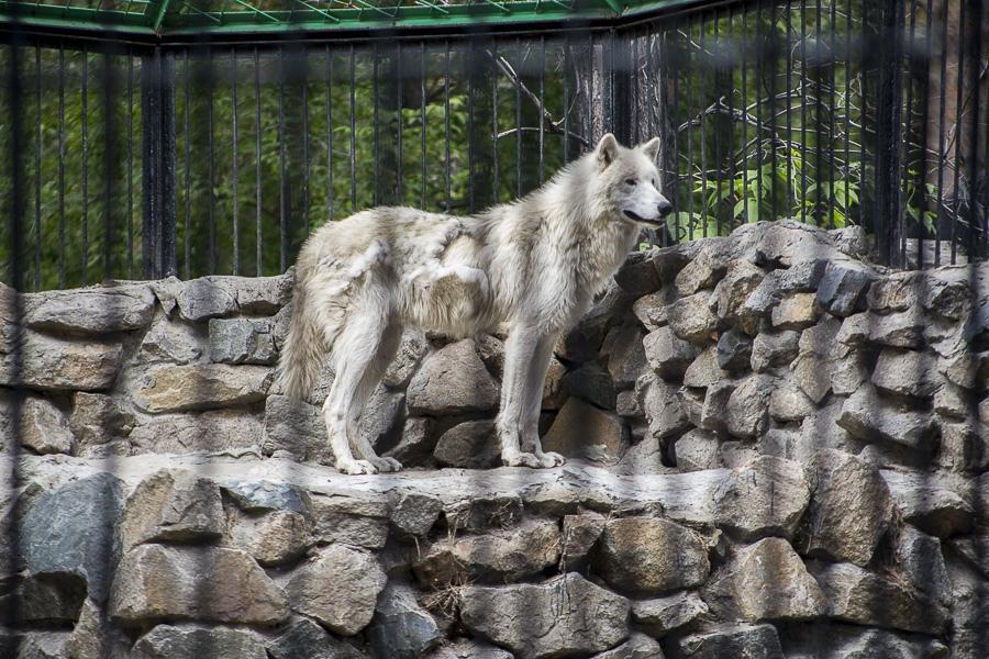 фото Новосибирский зоопарк получит субсидию в 22 миллиона рублей 2