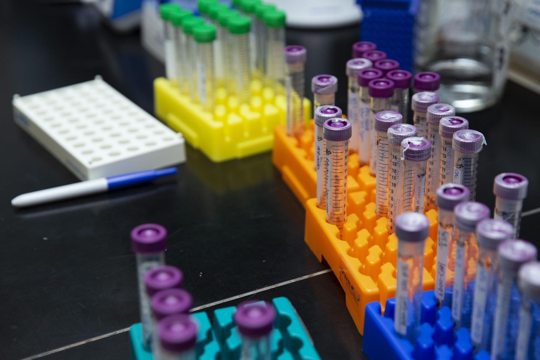 Фото Бесплатно провериться на антитела к коронавирусу можно в Новосибирской области 2