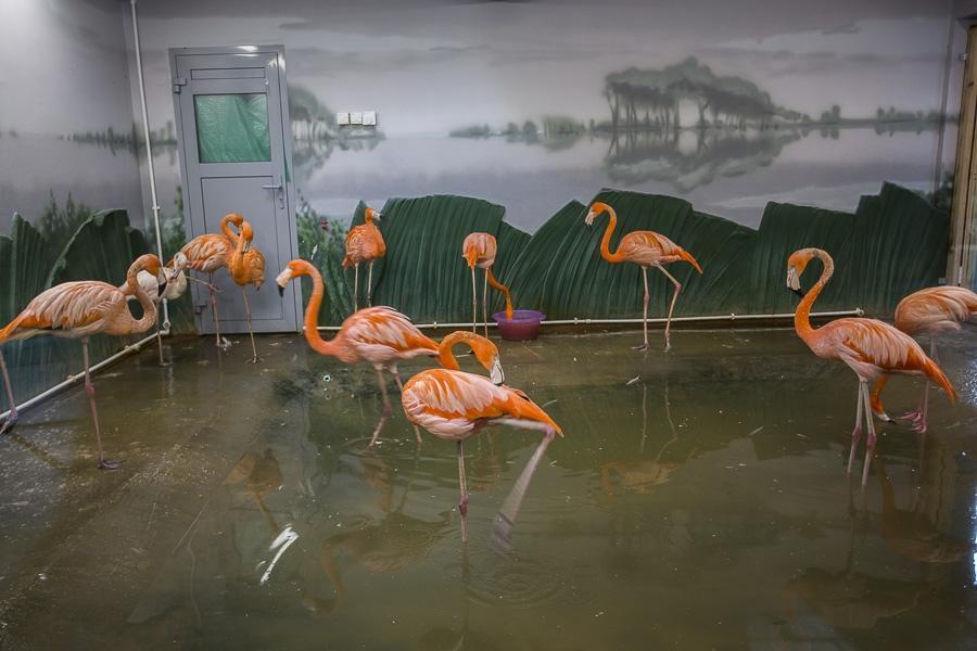 фото Новосибирское правительство выделило зоопарку почти 50 миллионов на содержание животных и новые вольеры 3
