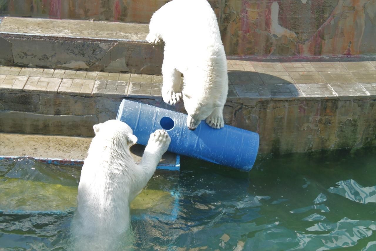 Фото Заждались гостей: Новосибирский зоопарк возобновил работу после карантина 10