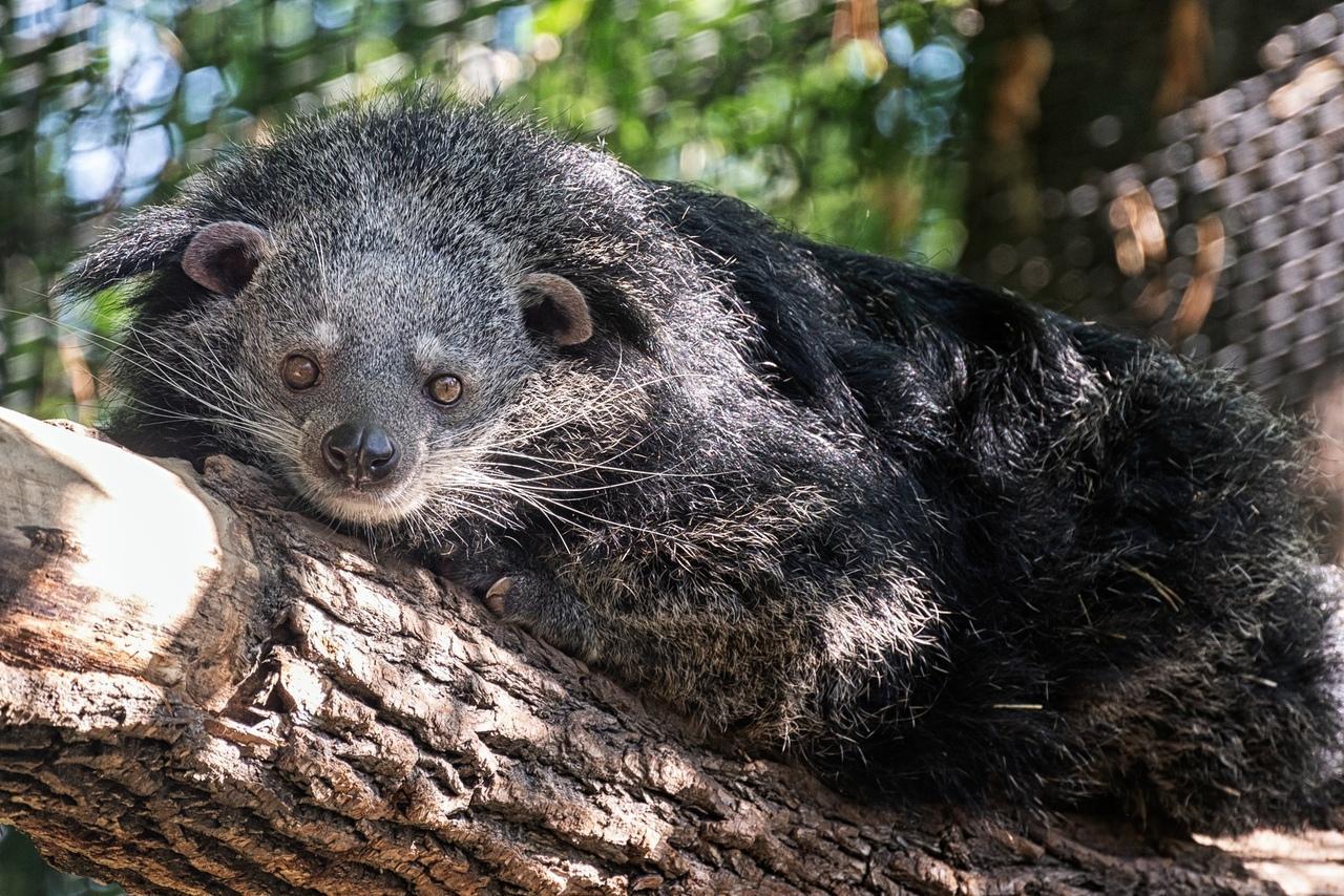 фото «А где все?»: Новосибирский зоопарк показал скучающих по посетителям животных 2