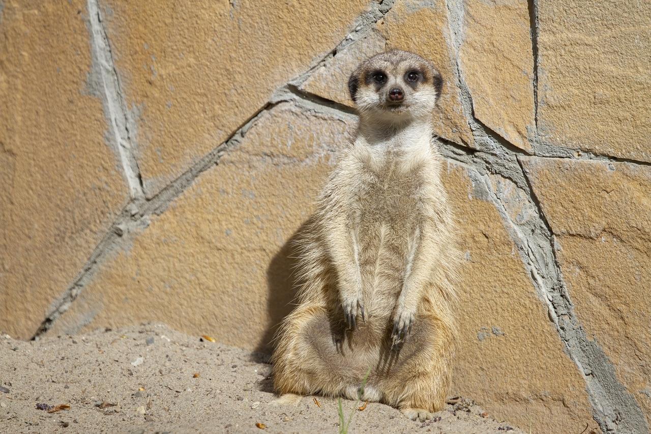 фото «А где все?»: Новосибирский зоопарк показал скучающих по посетителям животных 3