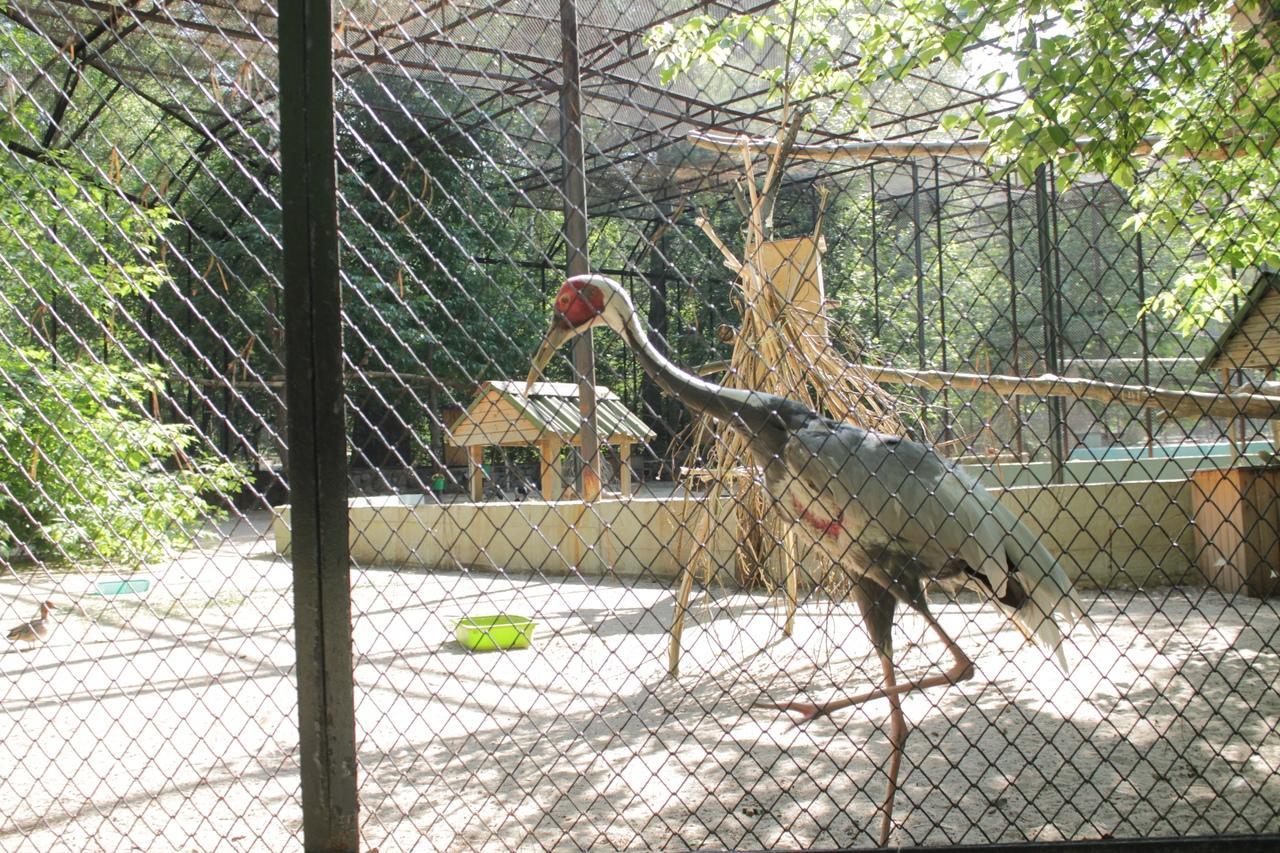 Фото Заждались гостей: Новосибирский зоопарк возобновил работу после карантина 13