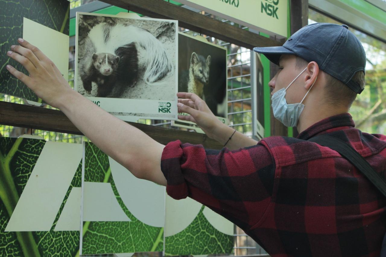 Фото Заждались гостей: Новосибирский зоопарк возобновил работу после карантина 8